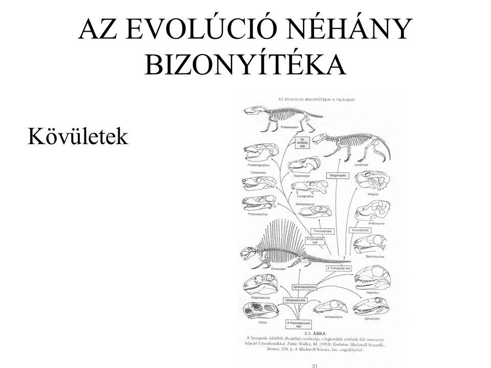 AZ EVOLÚCIÓ NÉHÁNY BIZONYÍTÉKA