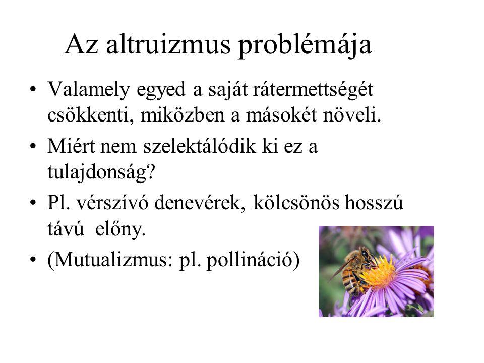 Az altruizmus problémája
