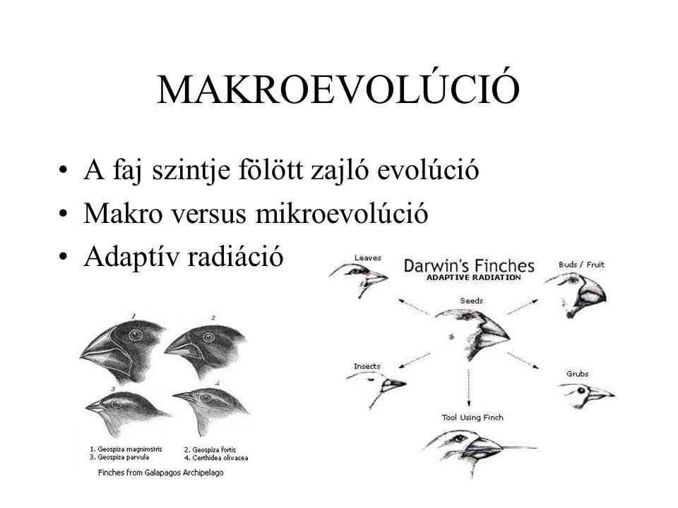 MAKROEVOLÚCIÓ A faj szintje fölött zajló evolúció