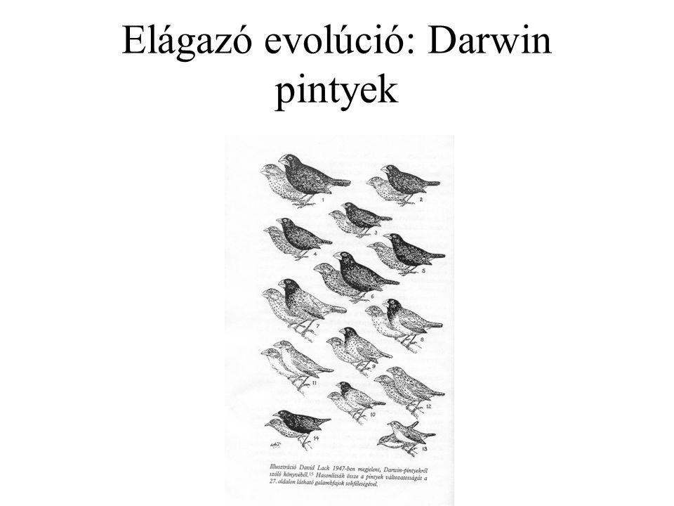 Elágazó evolúció: Darwin pintyek
