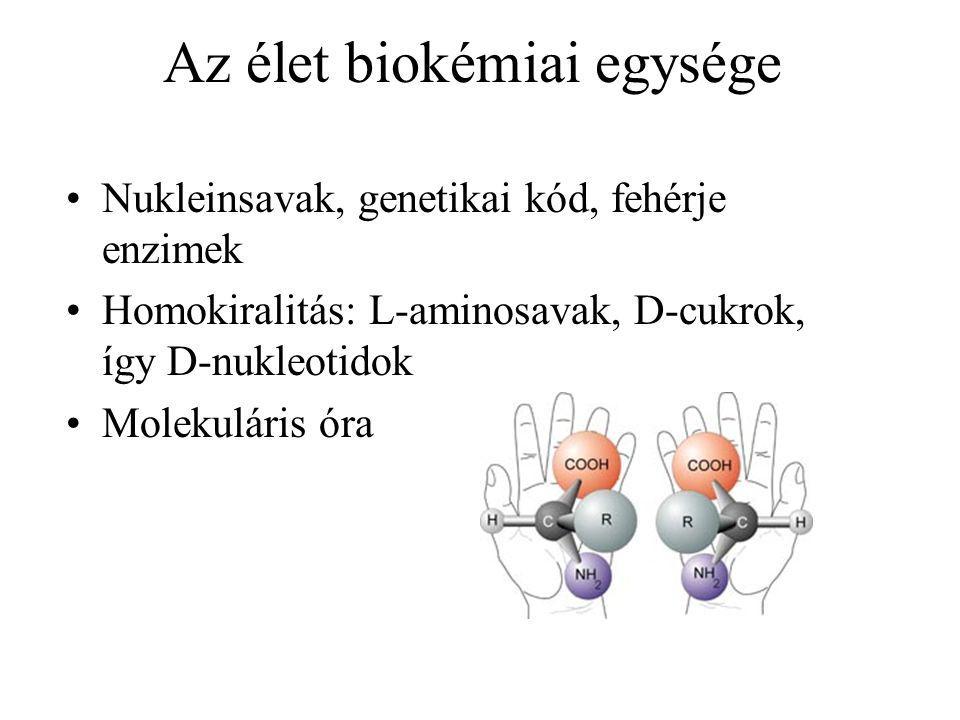 Az élet biokémiai egysége