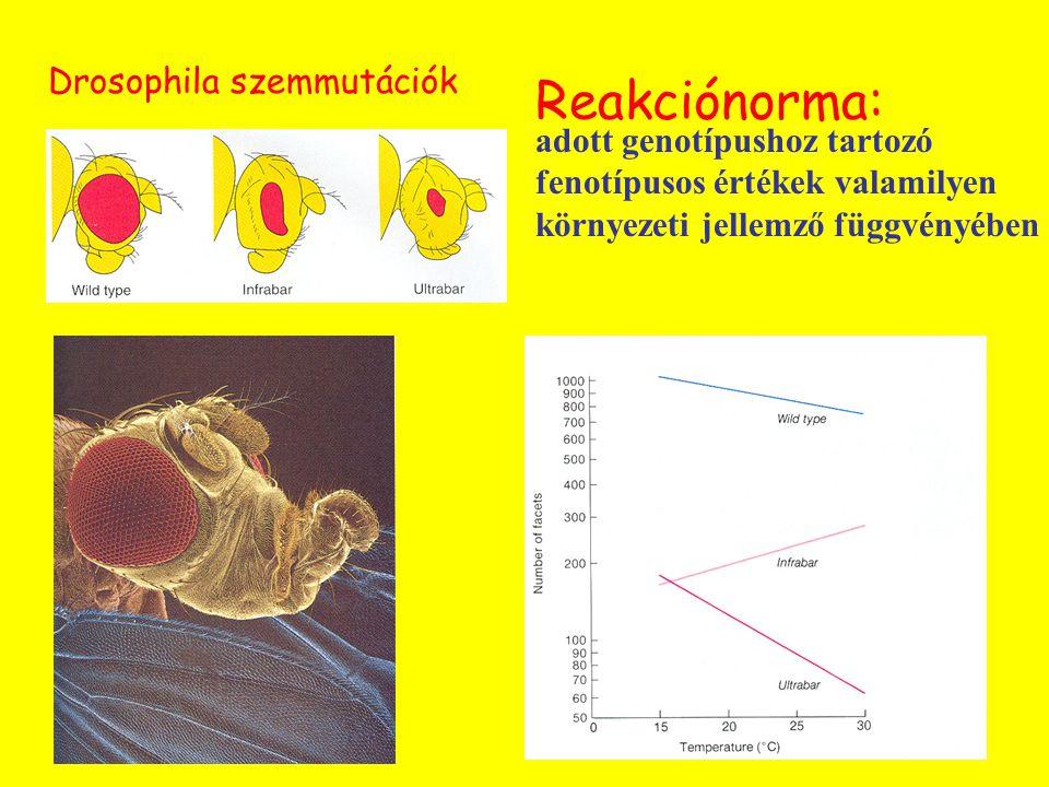 Reakciónorma: Drosophila szemmutációk