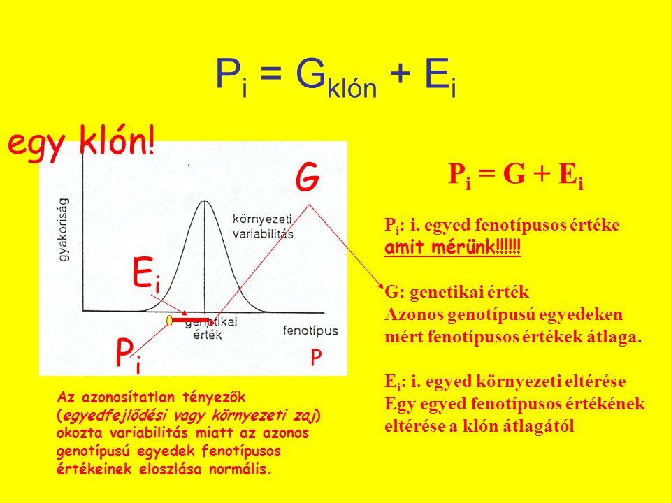 Pi = Gklón + Ei egy klón! G Ei Pi Pi = G + Ei P