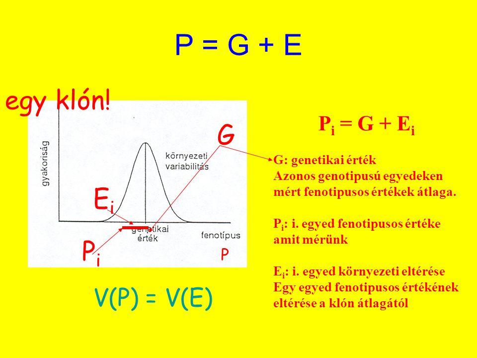 P = G + E egy klón! G Ei Pi V(P) = V(E) Pi = G + Ei P