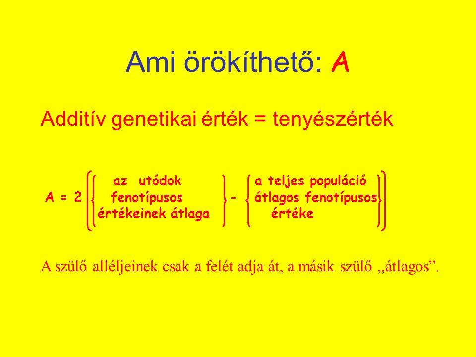 Ami örökíthető: A Additív genetikai érték = tenyészérték