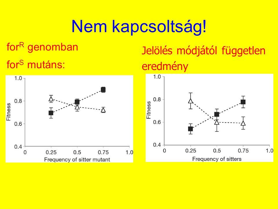 Nem kapcsoltság! forR genomban Jelölés módjától független forS mutáns: