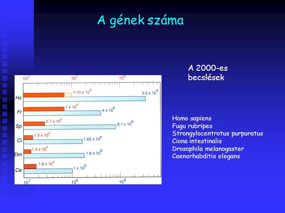 A gének száma A 2000-es becslések