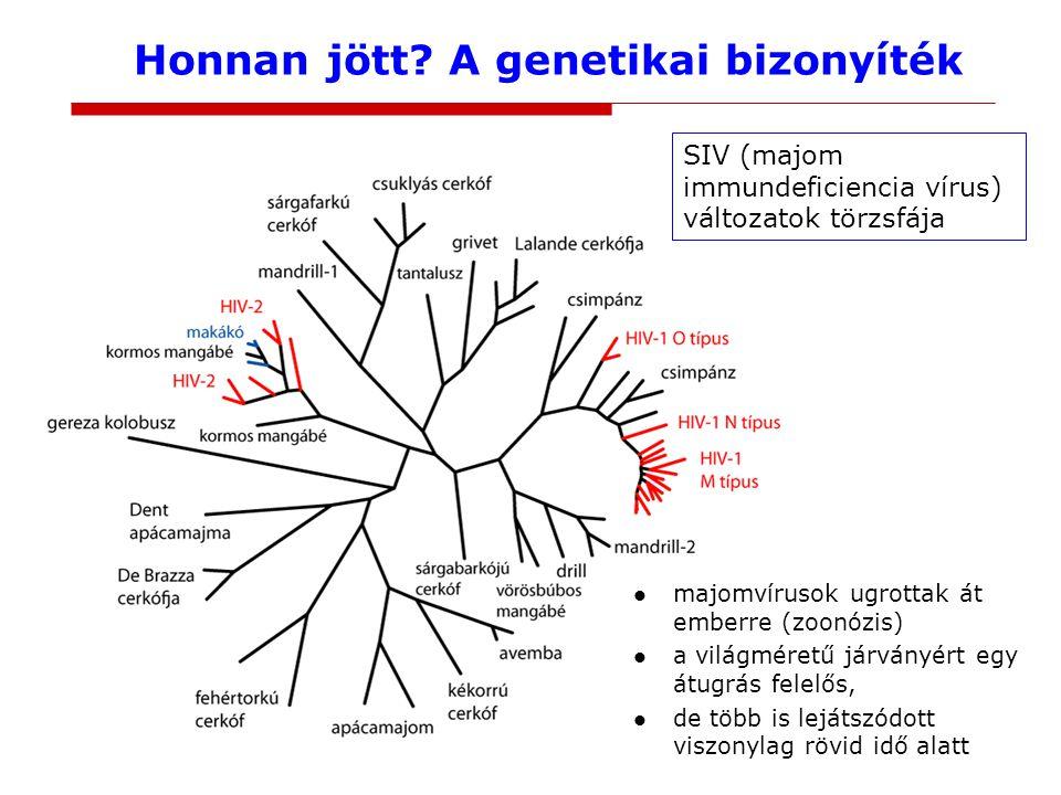 Honnan jött A genetikai bizonyíték