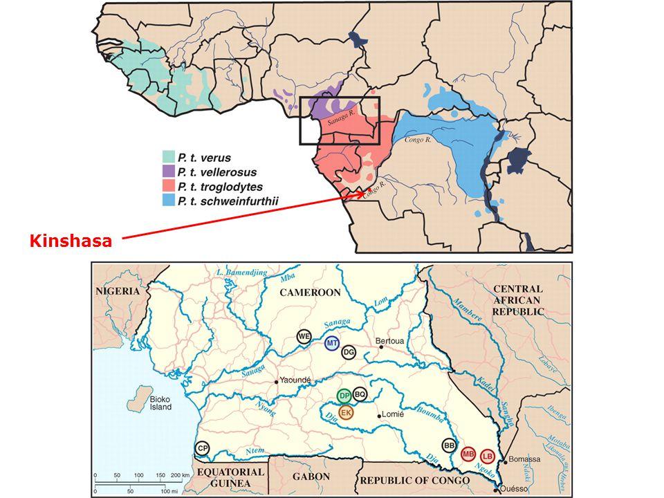 . Kinshasa. A körök csimpánzpopulációkat jelölnek, amelyekből SIV-et próbáltak izolálni. Keele et al Science 2006.