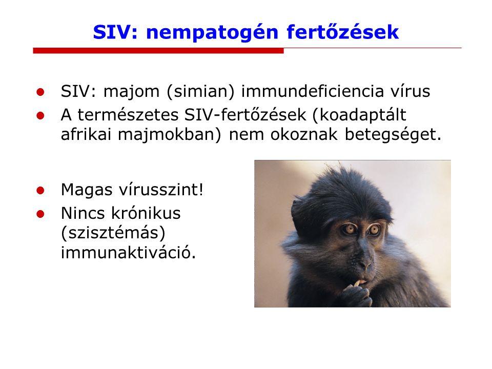 SIV: nempatogén fertőzések