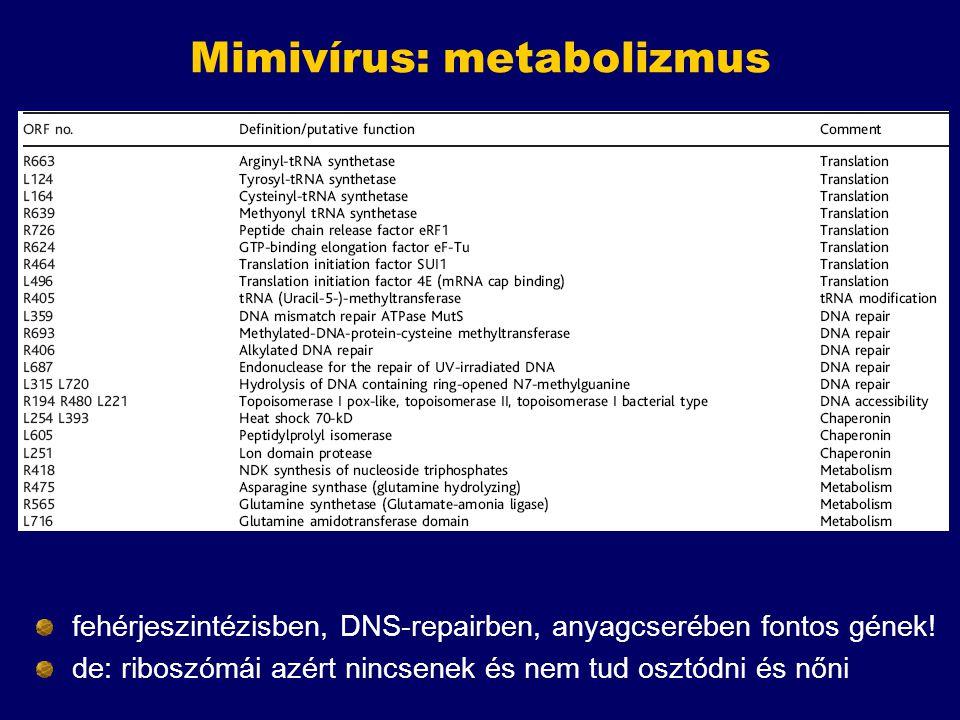 Mimivírus: metabolizmus