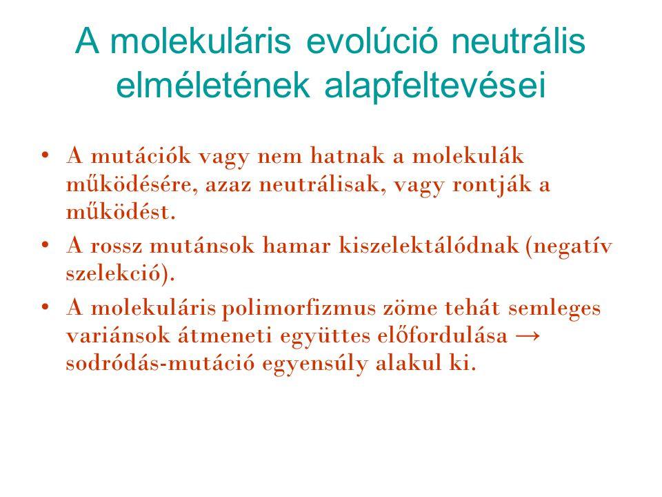 A molekuláris evolúció neutrális elméletének alapfeltevései