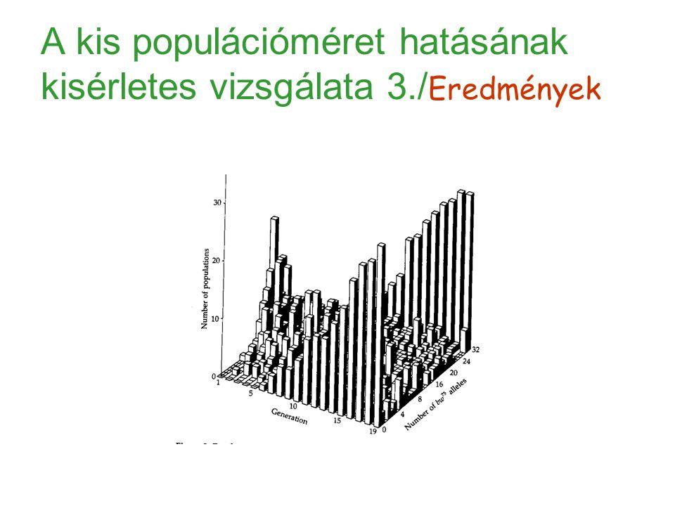A kis populációméret hatásának kisérletes vizsgálata 3./Eredmények