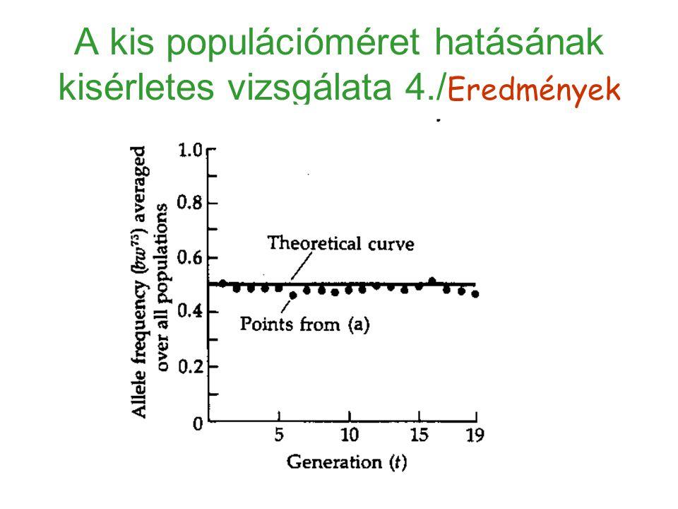 A kis populációméret hatásának kisérletes vizsgálata 4./Eredmények