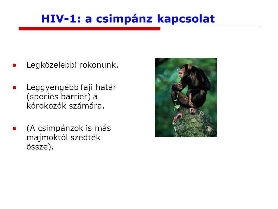HIV-1: a csimpánz kapcsolat