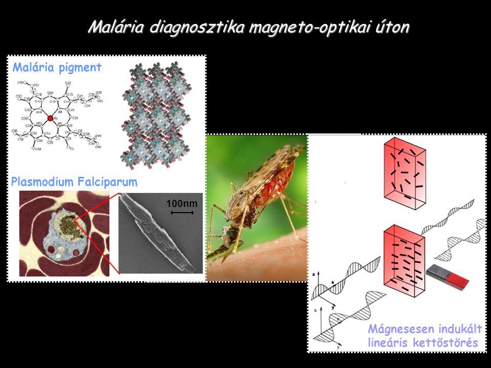 Malária diagnosztika magneto-optikai úton