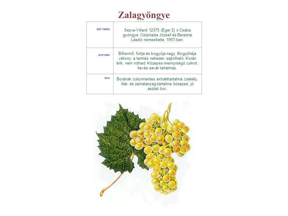 Zalagyöngye Származása: Sezve-Villard 12375 (Eger 2) x Csaba gyöngye. Csizmazia József és Bereznai László nemesítette, 1957-ben.