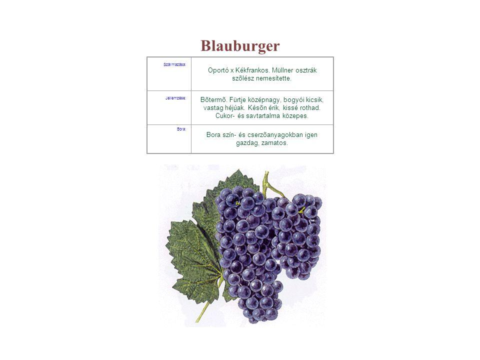 Blauburger Oportó x Kékfrankos. Müllner osztrák szõlész nemesítette.
