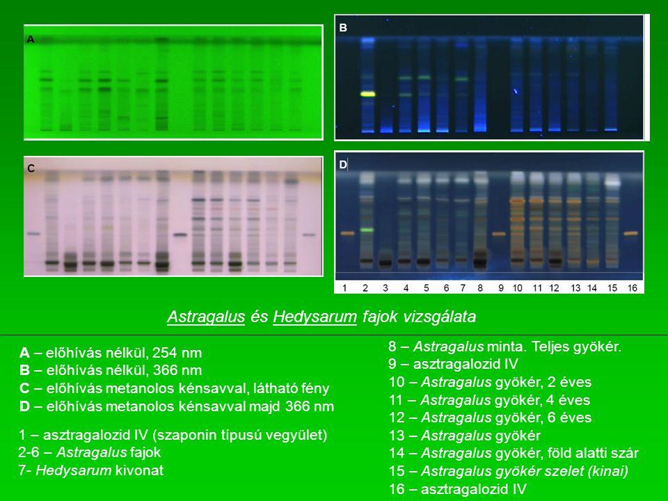 Astragalus és Hedysarum fajok vizsgálata
