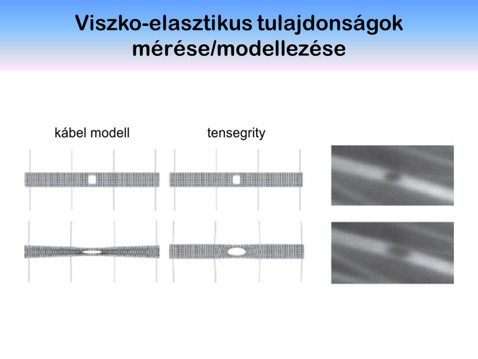Viszko-elasztikus tulajdonságok