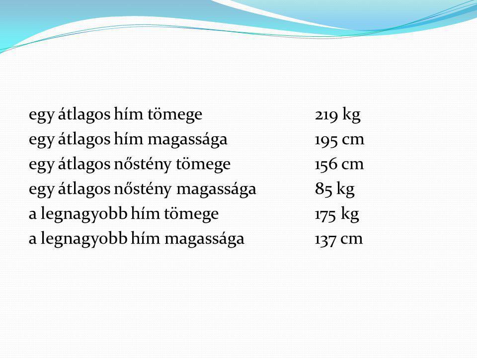 egy átlagos hím tömege 219 kg egy átlagos hím magassága 195 cm egy átlagos nőstény tömege 156 cm egy átlagos nőstény magassága 85 kg a legnagyobb hím tömege 175 kg a legnagyobb hím magassága 137 cm