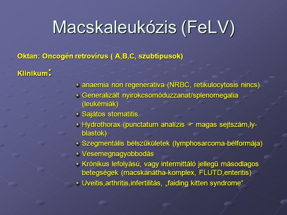 Macskaleukózis (FeLV)