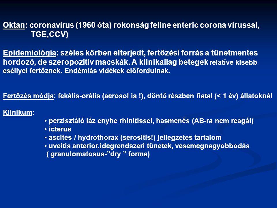 Oktan: coronavírus (1960 óta) rokonság feline enteric corona vírussal,