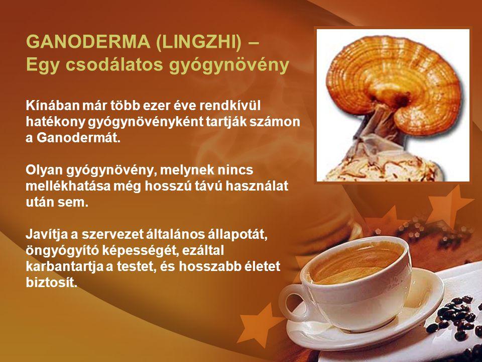 GANODERMA (LINGZHI) – Egy csodálatos gyógynövény Kínában már több ezer éve rendkívül hatékony gyógynövényként tartják számon a Ganodermát.