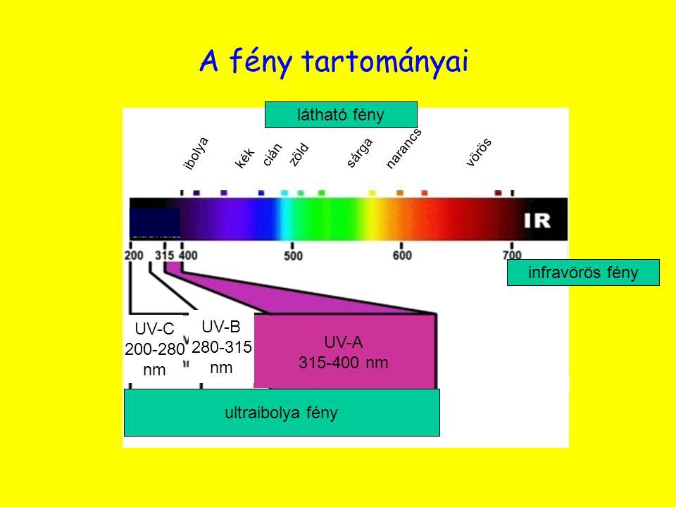 A fény tartományai látható fény infravörös fény UV-B UV-C 280-315 UV-A