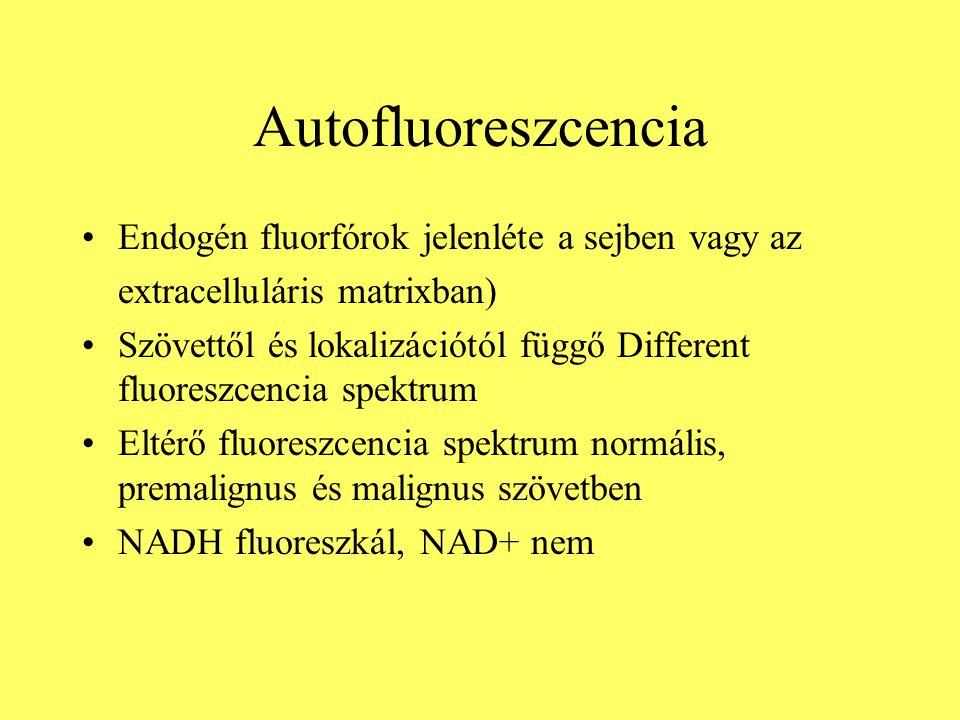 Autofluoreszcencia Endogén fluorfórok jelenléte a sejben vagy az