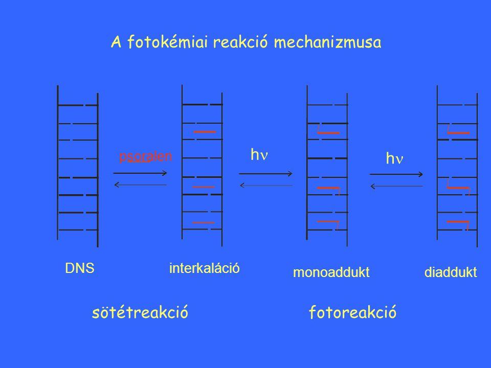 A fotokémiai reakció mechanizmusa
