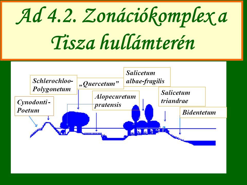 Ad 4.2. Zonációkomplex a Tisza hullámterén