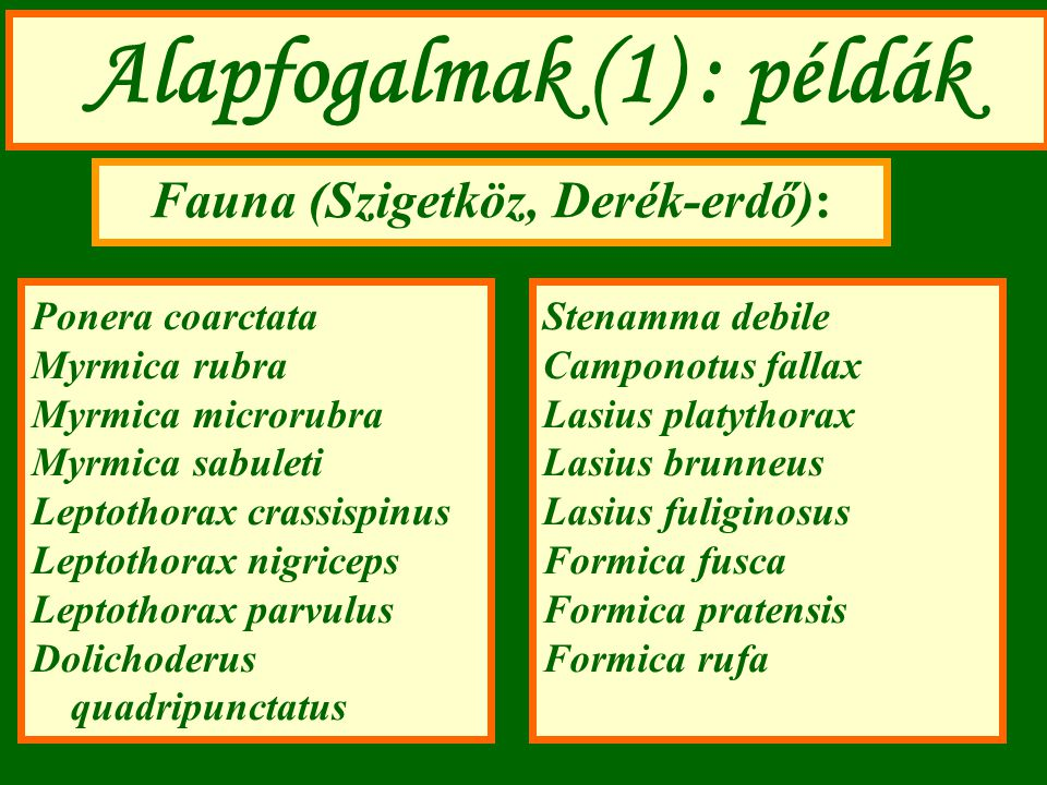 Alapfogalmak (1) : példák Fauna (Szigetköz, Derék-erdő):