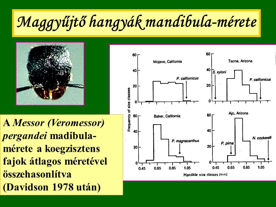 Maggyűjtő hangyák mandibula-mérete