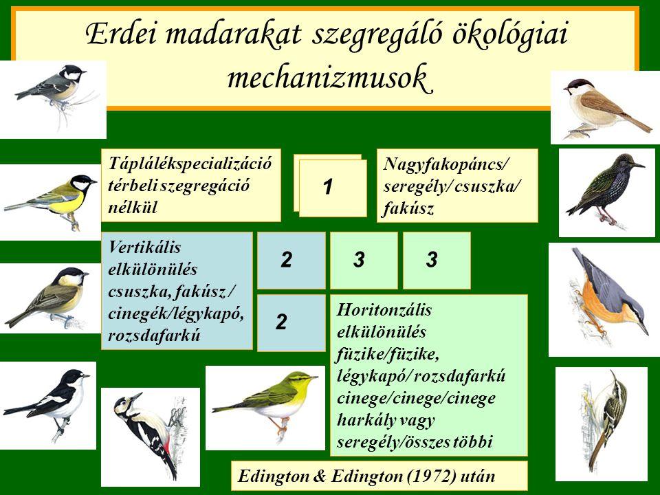Erdei madarakat szegregáló ökológiai mechanizmusok