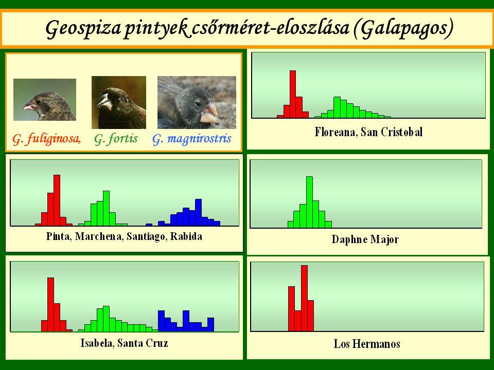 Geospiza pintyek csőrméret-eloszlása (Galapagos)