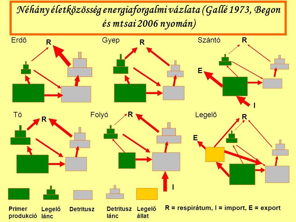 Néhány életközösség energiaforgalmi vázlata (Gallé 1973, Begon és mtsai 2006 nyomán)