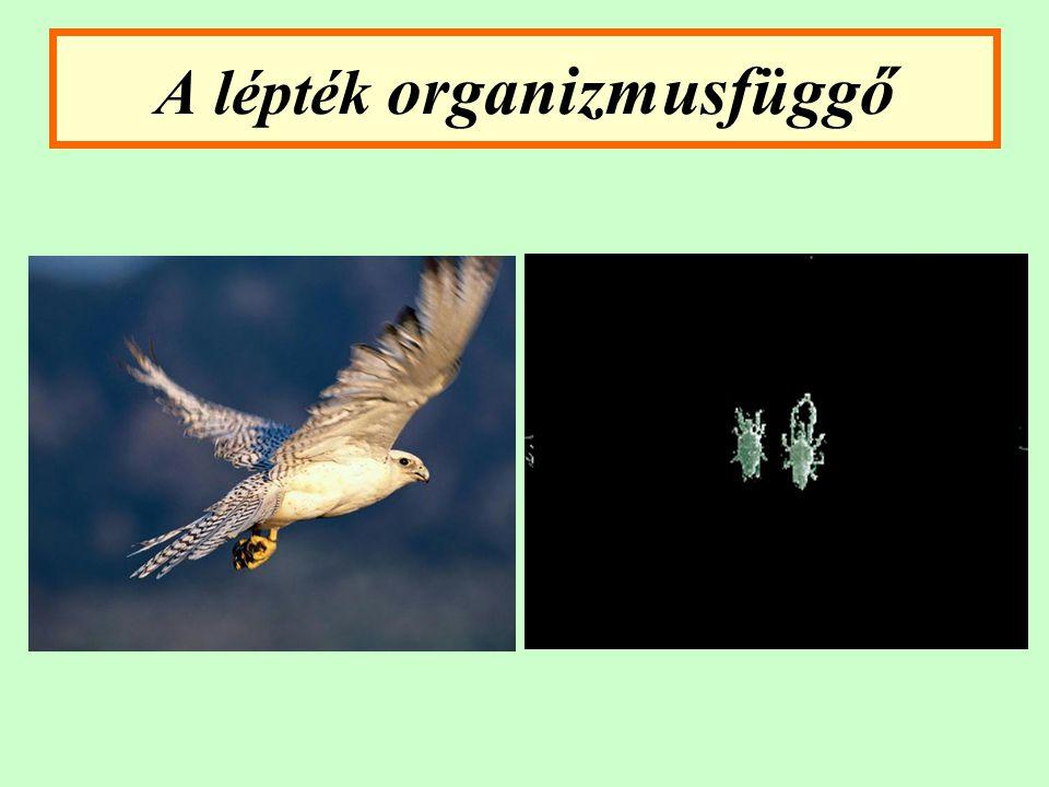 A lépték organizmusfüggő