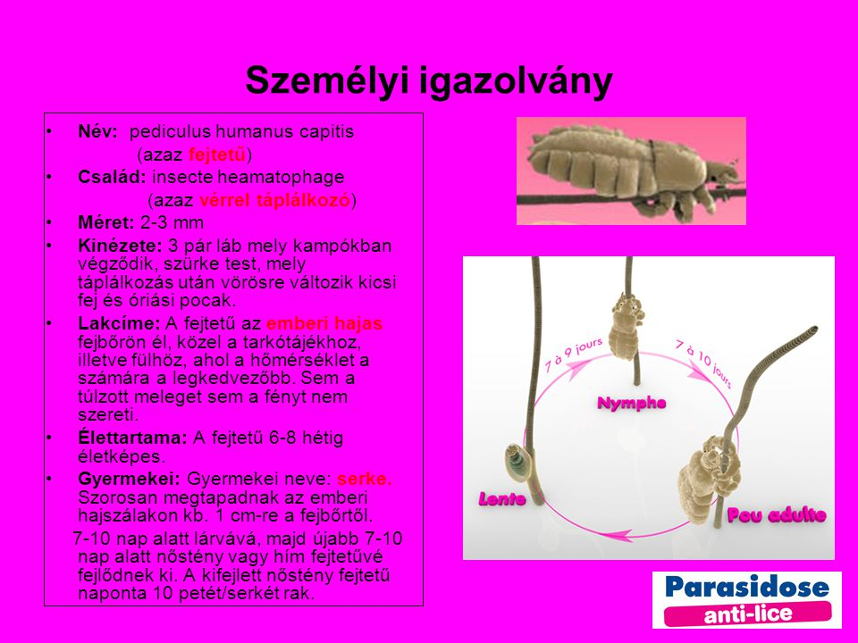 Személyi igazolvány Név: pediculus humanus capitis (azaz fejtetű)