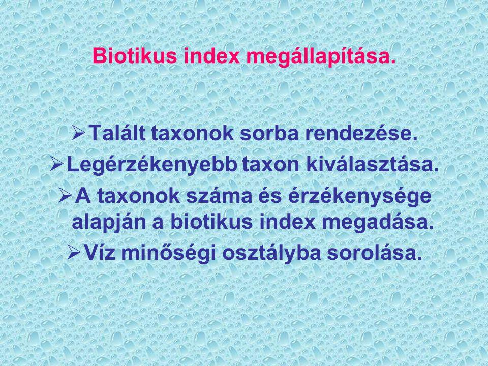 Biotikus index megállapítása.