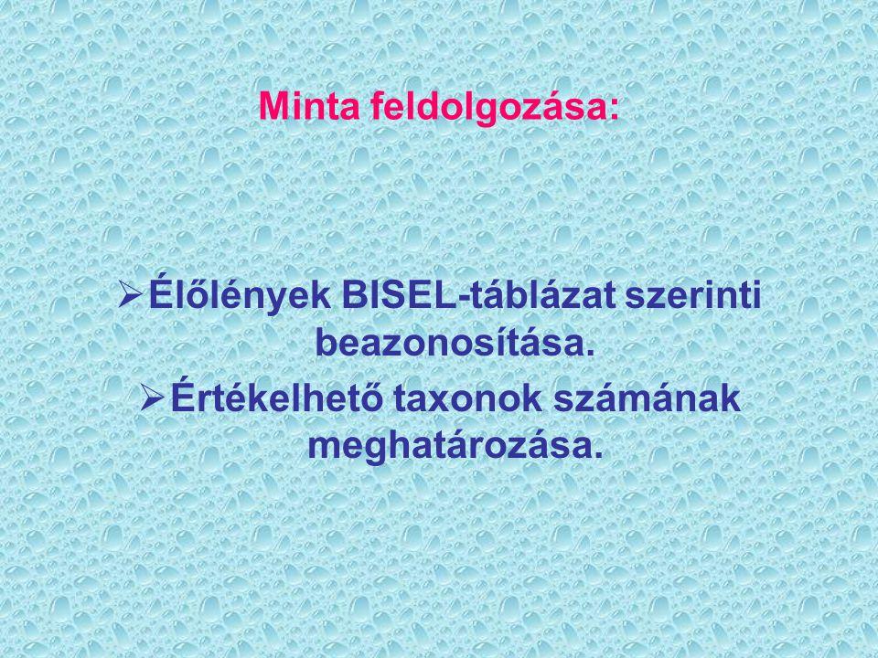 Élőlények BISEL-táblázat szerinti beazonosítása.