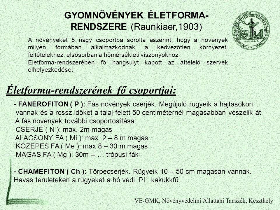 GYOMNÖVÉNYEK ÉLETFORMA-RENDSZERE (Raunkiaer,1903)