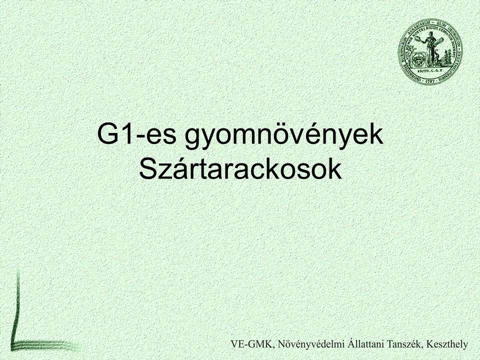 G1-es gyomnövények Szártarackosok
