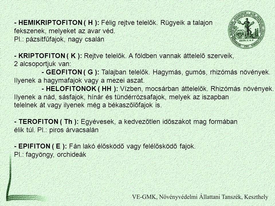- HEMIKRIPTOFITON ( H ): Félig rejtve telelők. Rügyeik a talajon