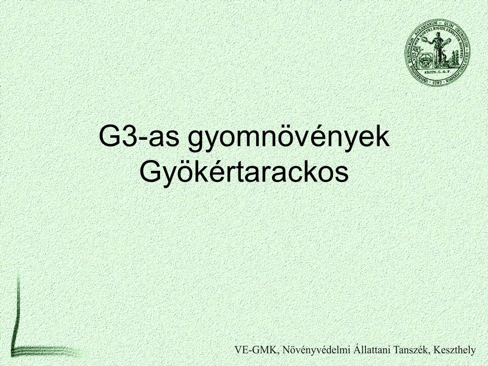 G3-as gyomnövények Gyökértarackos