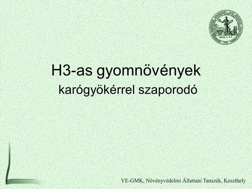 H3-as gyomnövények karógyökérrel szaporodó