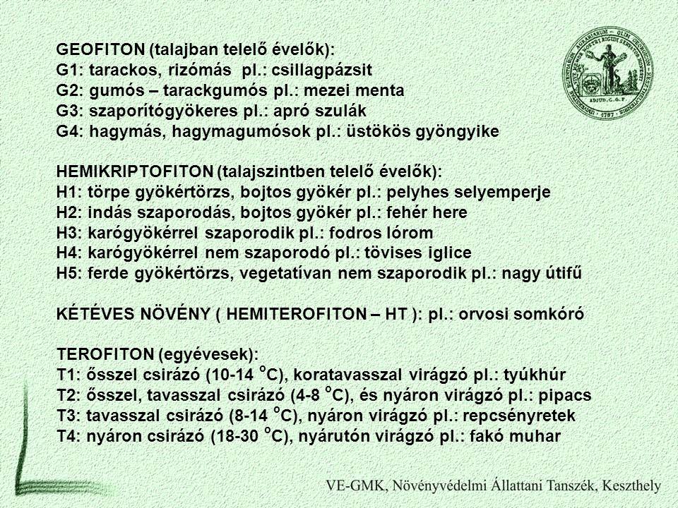 GEOFITON (talajban telelő évelők):