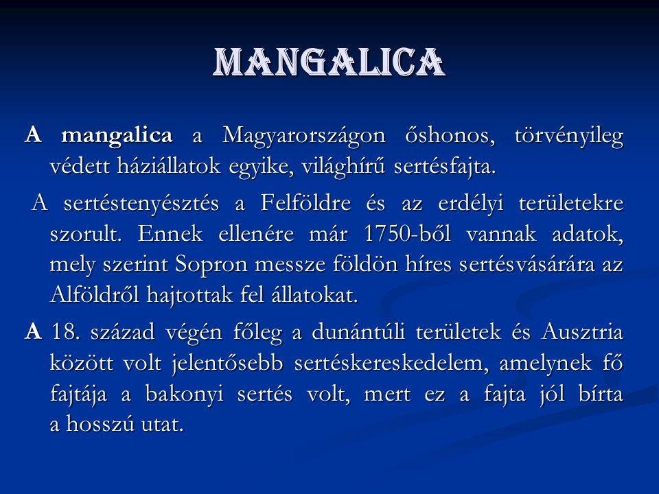 Mangalica A mangalica a Magyarországon őshonos, törvényileg védett háziállatok egyike, világhírű sertésfajta.