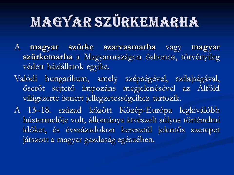 Magyar szürkemarha A magyar szürke szarvasmarha vagy magyar szürkemarha a Magyarországon őshonos, törvényileg védett háziállatok egyike.
