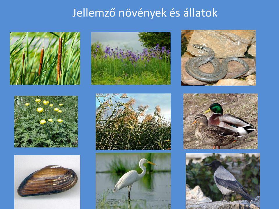 Jellemző növények és állatok